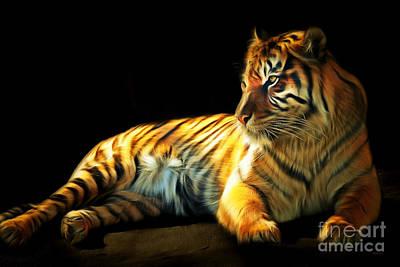 Sumatran Tiger 20150210brun Print by Wingsdomain Art and Photography