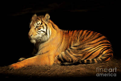 Sumatran Tiger 20150211brun Print by Wingsdomain Art and Photography