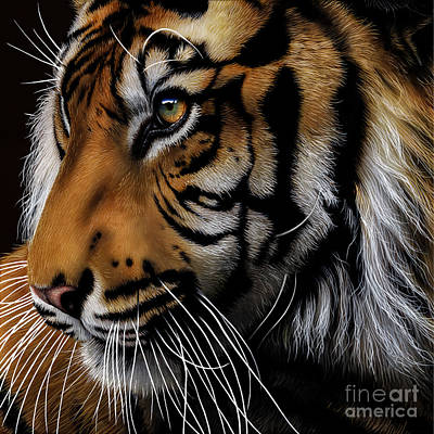 Tiger Painting - Sumatran Tiger Profile by Jurek Zamoyski