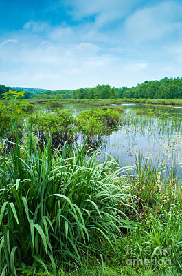 Forest Photograph - Summer - Swamplands Of Haddam Meadows by JG Coleman