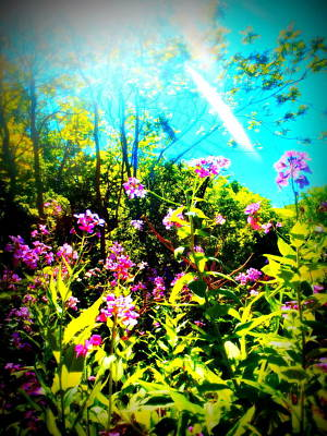 Photograph - Summer Beauty by Alicia Forton
