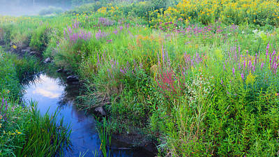 Litchfield County Landscape Photograph - Summer Bouquet by Bill Wakeley
