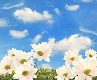 Summer Daisies Print by Amanda And Christopher Elwell