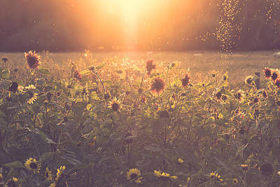 Sunflower Field Photograph - Summer Evening by Chris Fletcher