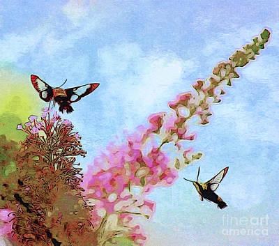 Hummingbird Photograph - Summer Flight  by Kerri Farley