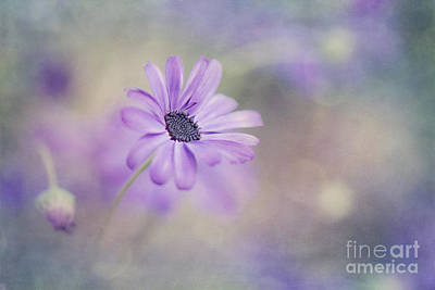 Macro Flower Photograph - Summer Garden by Priska Wettstein