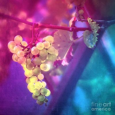 Fall Wine Grapes Photograph - Summer Grapes by VIAINA Visual Artist