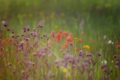 Grow Digital Art - Summer Meadow by Ellen Heaverlo
