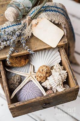 Shells Photograph - Summer Memories by Viktor Pravdica