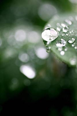 Summer Rain Print by AR Annahita