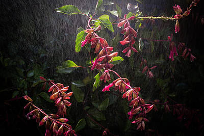 Sage Photograph - Summer Rain by Priya Ghose