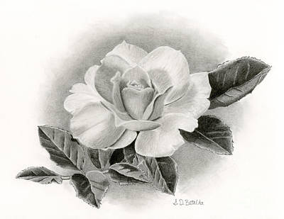 White Drawing - Summer Rose by Sarah Batalka