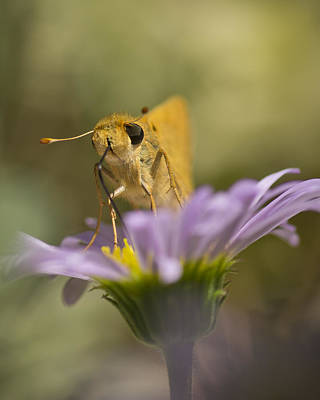 Vertical Photograph - Summer Skipper by Priya Ghose