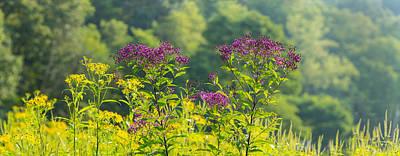 Cuyahoga Photograph - Summer Weeds, Cuyahoga Valley National by Panoramic Images
