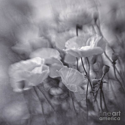 Flower Gardens Photograph - summer whipsers IIII by Priska Wettstein