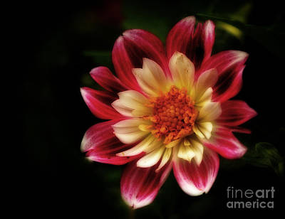 Summers Dream - Awaiting Pollination Print by Inspired Nature Photography Fine Art Photography