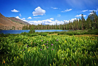 Yosemite Photograph - Summertime At Trumbull Lake by Lynn Bauer
