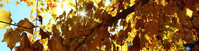 Autumn Photograph - Sun And Leaves by Stephen Hobbs