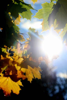 Sun Beam  Print by Neal  Eslinger