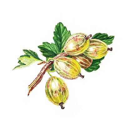 Watercolors Painting - Sun Kissed Gooseberries Branch by Irina Sztukowski