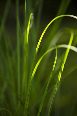 Sun-kissed Grass Print by Christina Rollo