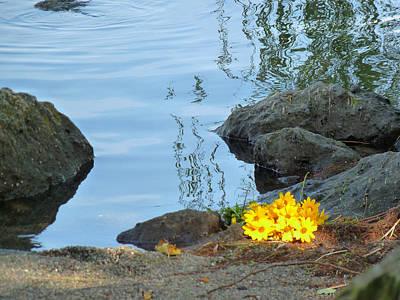 Landscape Photograph - Sun On Yellow Flowers by Marcia Socolik