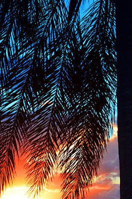 Palm Fronds Photograph - Sun Palm by Laura Fasulo