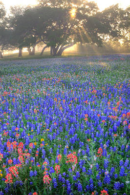 Sun Rays On Wildflowers Print by Eggers   Photography