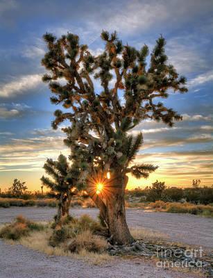 Sun Rays Through A Joshua Tree Print by Eddie Yerkish