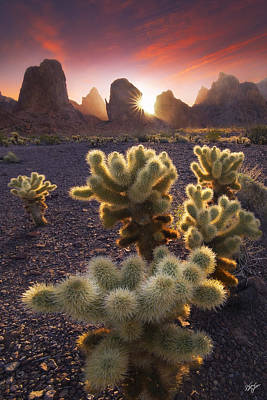 Peter James Nature Photograph - Sunburnt  by Peter Coskun