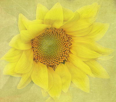 Sunflower 2 Print by Angie Vogel