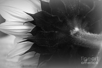 Sunflowers Photograph - Sunflower Abstract 3 by Clare Bevan