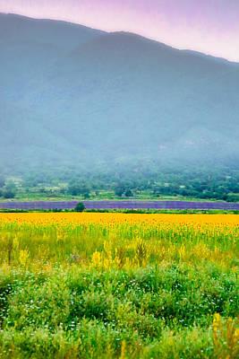 Shed Digital Art - Sunflower And Lavender Fields In Mist by Eti Reid