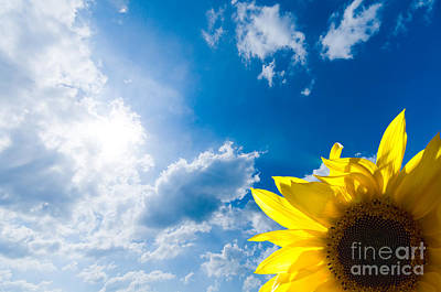 Backdrop Photograph - Sunflower And The Sky by Michal Bednarek