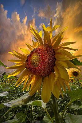 Sunflower Dawn Print by Debra and Dave Vanderlaan