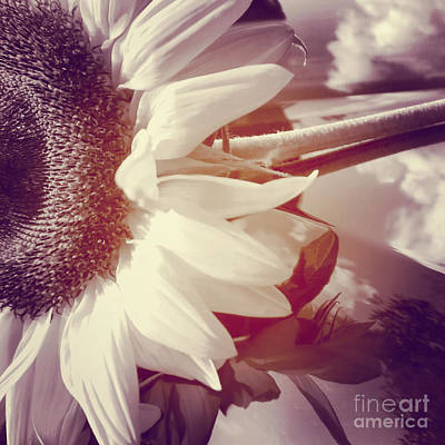 Flora Photograph - Sunflower Digital Art by Charlie Cliques