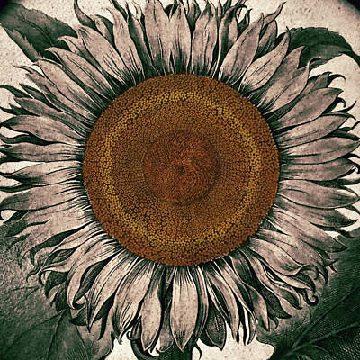Sunflower - Face To The Sunshine Print by Patricia Januszkiewicz