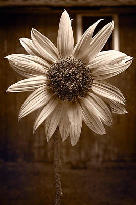 Composite Photograph - Sunflower Farm B W by Steve Gadomski