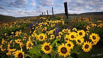 Sunflower Field Print by Cole Black