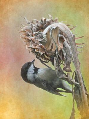 Sunflower Harvest Print by Angie Vogel