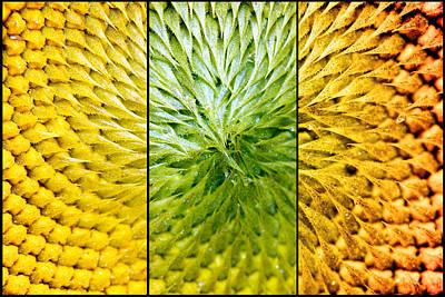 Sunflower Heart Triptych Print by Lisa Knechtel
