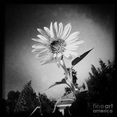 Floral Photograph - Sunflower In B/w by Nina Prommer