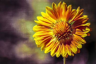 Eureka Springs Photograph - Sunflower In Purple by Carolyn Marshall