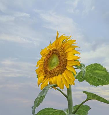 Garden Flowers Photograph - Sunflower by Kim Hojnacki