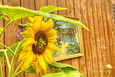 Sunflower On A Fence Print by Jim Lepard