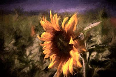 Sunflower On The Farm Print by John K Woodruff