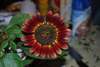 Sunflower Print by Robert Floyd