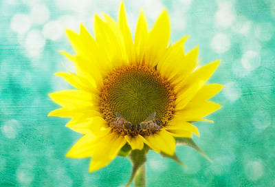 Natural Art Photograph - Sunflower - Sun Kiss 2 by John Hamlon