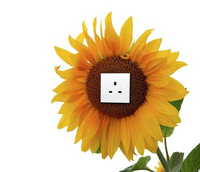 Sunflower With An Electrical Socket Print by Victor De Schwanberg