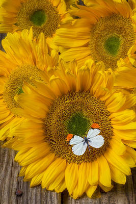 Sunflowers Photograph - Sunflower With White Butterfly by Garry Gay